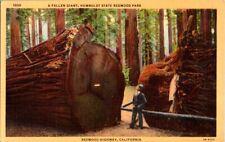 Postcard Fallen Giant Redwood Highway Humboldt State Redwood Park