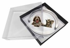 Italian Spinone Dog and Kittens Glass Paperweight in Gift Box Christma, AD-SP1PW