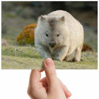 "Cute Wombat Australia Small Photograph 6"" x 4"" Art Print Photo Gift #2295"