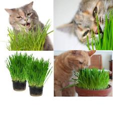 Organic Cat Grass 14  DAYS TO GROW BUY 2 GET 2 FREE Cat treat catnip