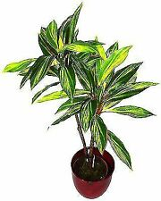 GEKO Large 3ft 90 Cm Artificial Dracaena House Plant Indoor or Outdoor Use
