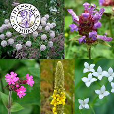 Rare WILDFLOWER MIX FOR SHADE  Flowers approx 150 seeds UK SELLER