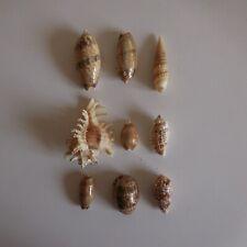 9 Shells Gastéropodes Mer Ocean Brown White Collection Decoration N4725