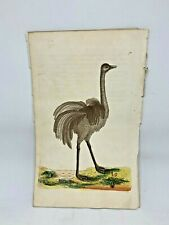 Ostrich - 1783 RARE SHAW & NODDER Hand Colored Copper Engraving
