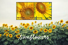 Gambia-2017  Fauna and Flora, Flowers-sunflower-I70058