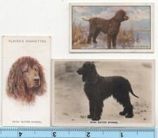 Irish Water Spaniel Dog Pet Canine 3 Different Vintage Ad Trade Cards #4