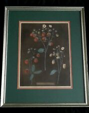 Antique botanical lithograph Strawberry Plants, PLATE III late 1800's