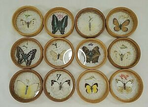 12 Vintage Real Butterfly Pressed Bamboo Coasters - Nice Variety