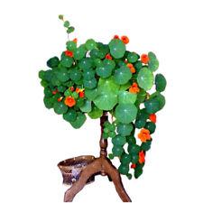 Perennial Nasturtium Seeds climbing Flower Garde indoor Plants