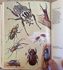 Grzimek's ENCYCLOPEDIA Bugs/INSECTS/Beetles/Butterflies & MORE 1975 NICE! L@@K!