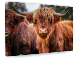 HIGHLAND COW ANIMAL CANVAS PICTURE PRINT WALL ART A555