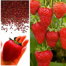 100pcs Giant Strawberry Seeds, Garden Fruit Plant, Sweet And Delicious