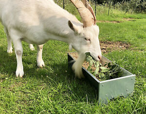 Metal Feeder Trough Pygmy Goat Sheep Alpacas Horse Pig Dog Chicken Duck Bird Pet