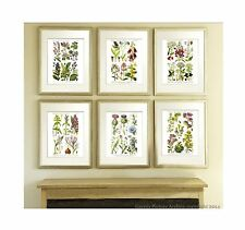 Antique Botanical Print set of 6 Wild Flowers English Cottage Decor Wall Hanging