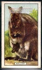 Wallaby Australian Marsupial c80 Y/O Trade Ad Card
