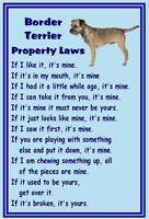 Border Terrier - New - Dog fridge magnets New Gift - Free UK p/p