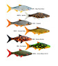 Storm R.I.P. Roach Lure Soft Plastic Lures Full Range Swimbaits Predator Fishing
