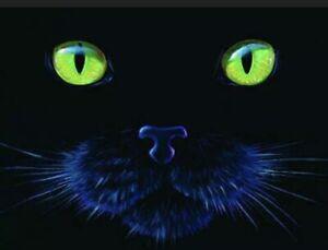 Black Cat 1000 pc Jigsaw Puzzle by SunsOut