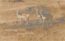 H37/ Elbert Colorado Rppc Postcard 1909 Antelope Wild Mammals Hunting