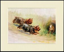 YORKSHIRE TERRIER TWO DOGS CHASE RABBIT DOG PRINT MOUNTED READY TO FRAME