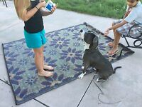 Clearance 2 Pack 5'x7' Indoor Outdoor Rug, Patio RV Mat Camping Mat 20379