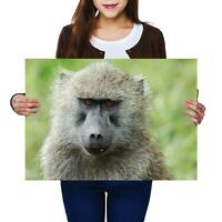 A2 | Olive Baboon Monkey Wild Animal Size A2 Poster Print Photo Art Gift #12747
