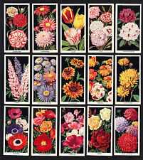 Cigarette Cards. Carreras Tobacco. Flowers. (Complete Set of 50). (1936).