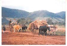 B8997 Paraguay Imagen del campo Cows Vaches