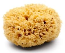 Large Adult Bath 6.5''- 7'' Premium Brown Uncut Formed Soft Greek Sea Sponge