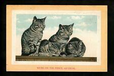 Cat postcard kittens on fence comic Vintage 1911