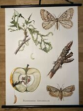 Apfelwickler Falter Wald Insekten  Schulwandkarte 50 cm x 70 cm