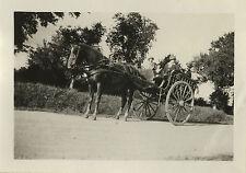 PHOTO ANCIENNE - VINTAGE SNAPSHOT - CHEVAL ATTELAGE CHARRETTE CALÈCHE - HORSE