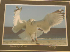 Dancing Gull 8 x 10 Wildlife signed Marty Grassie Photograph Art Print Bird New
