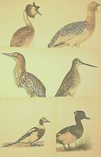 # COLLECTION # OF 6 COLOUR 1950s VINTAGE BIRD PRINTS * BY E DEMARTINI