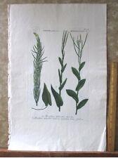 """Vintage Engraving,BRASSICA,Mustards,C.1740,WEINMANN,Botanical,20x13.5"""",Mezzotint"""
