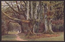 A. R. Quinton. The New Forest. Giant Beeches. J. Salmon Postcard #2861