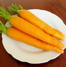 N55 CARROT SEEDS SAMEN Daucus carota SOLAR YELLOW 300 graines de CAROTTE JAUNE