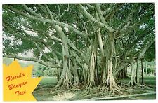 Florida Banyan Tree Photo By Ted Lanerberg Chrome Postcard Cond: Vg