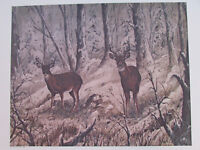 "Vintage John Le Roi Sheffer Pair Of Deer Bucks Wall Art Print 1974 24"" x 18"""