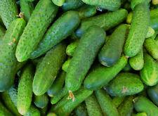 20 Samen Traubengurke kleine Pariser Einlegegurke Gewürzgurke Gurkensamen