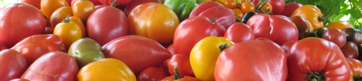 tomate de charme graines / seeds