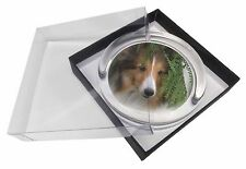 Shetland Sheepdog Glass Paperweight in Gift Box Christmas Present, AD-SE34PW