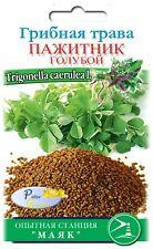 Graines du Herbe aux champignons - fenugrec - trigonelle fenugrec - sénégrain