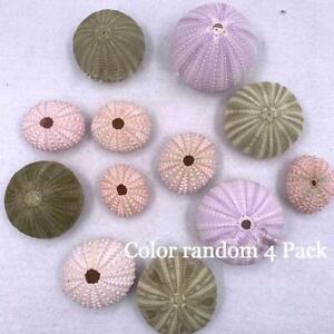 Natural Beach Shells Home Decor Seashells Wedding Display Craft Aquarium Sea