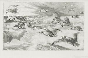 A great Felix Bracquemond etching, Les Mouettes, 1880's pencil signed