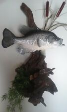 Real skin crappie fish mount. 14 in from end of tail to mouth. With driftwood