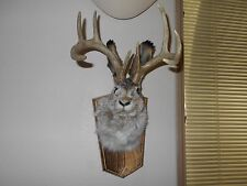 JACKALOPE HEAD MOUNT 8 POINT RABBIT PROFESSIONALLY done DEER ANTLERS mounted #7