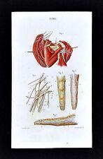 1867 Masse Human Anatomy Print Nervous System Brachial Plexus Palm Finger Nerves