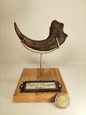 Cabinet de curiosités Réplique Griffe De Vélociraptor