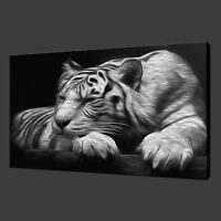 SLEEPING TIGER CANVAS WALL ART PICTURES PRINTS 30 x 20 Inch FREE UK P&P